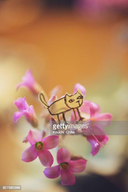 flower and  cat - kouichi chiba stock photos and pictures