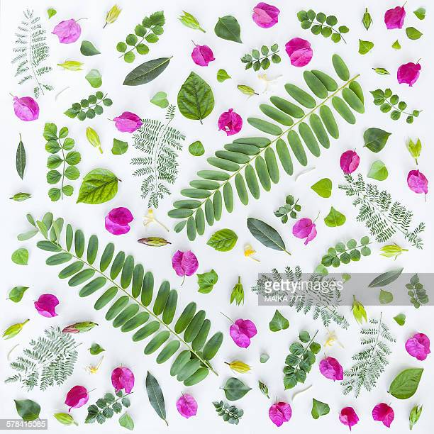 Flower and leaves, seamless pattern, on white