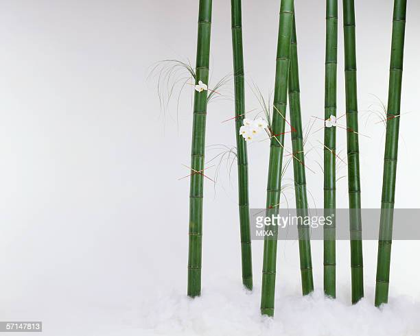 Flower arranged with bamboo trunks
