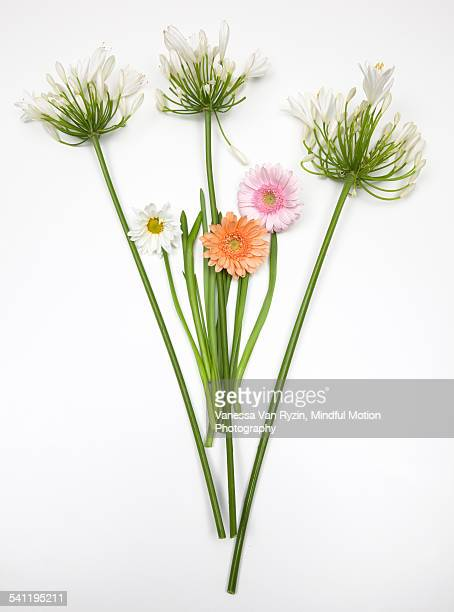 flower arrangement on white - vanessa van ryzin stock photos and pictures