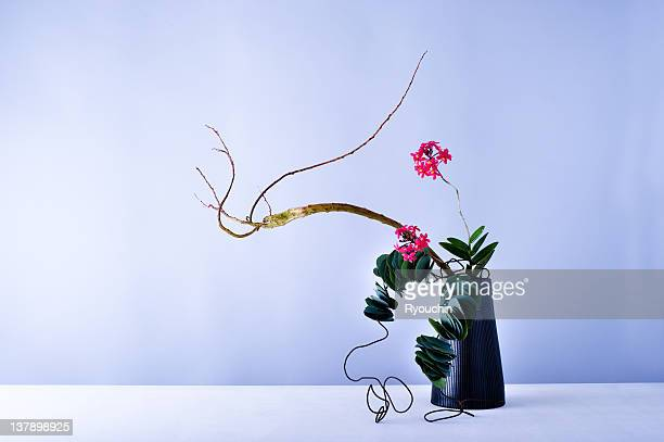 flower arrangement - composizione di fiori foto e immagini stock