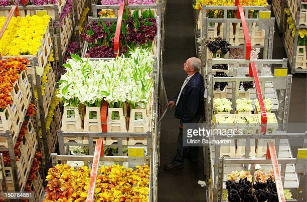 Flower auction of Bloemenveiling Aalsmeer : international platform for the trade with flowers and ornamental plants.