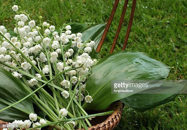 cesto di fiori - mughetto foto e immagini stock