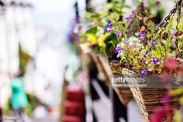 flower baskets hanging outdoors - hanging basket stock pictures, royalty-free photos & images
