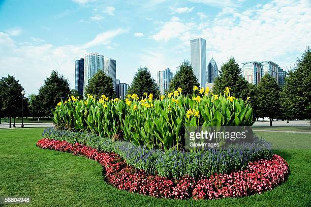 flower bed in a park, gateway park, chicago, illinois, usa - gladiolus stock pictures, royalty-free photos & images