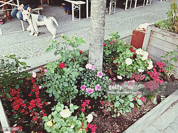 Flower Bed In Street