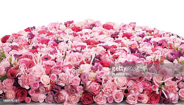 Bed Of Roses Stock Pictures Royalty Free Photos Images Getty