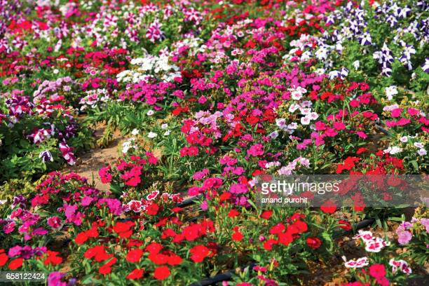 flower bed - flower show stock pictures, royalty-free photos & images