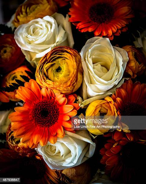 flower bouquet in autumn colours - lise ulrich stock pictures, royalty-free photos & images