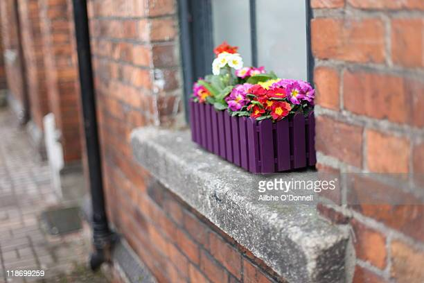 Flower box outside window