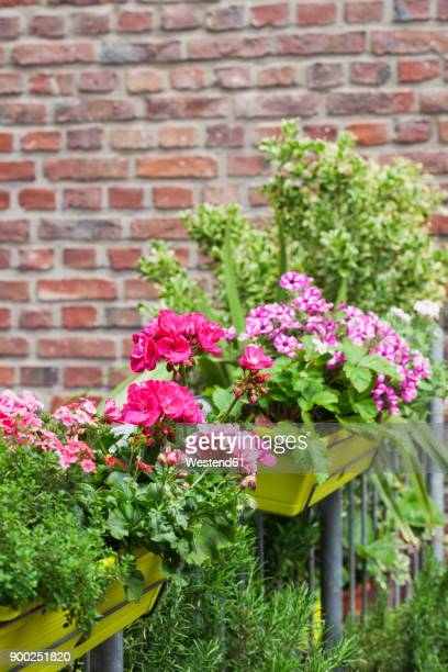 flower boxes with blossoming summer flowers and rosmary - geranium stock pictures, royalty-free photos & images