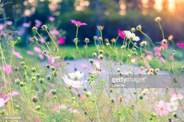 flower buds grow towards sunlight - liyao xie fotografías e imágenes de stock