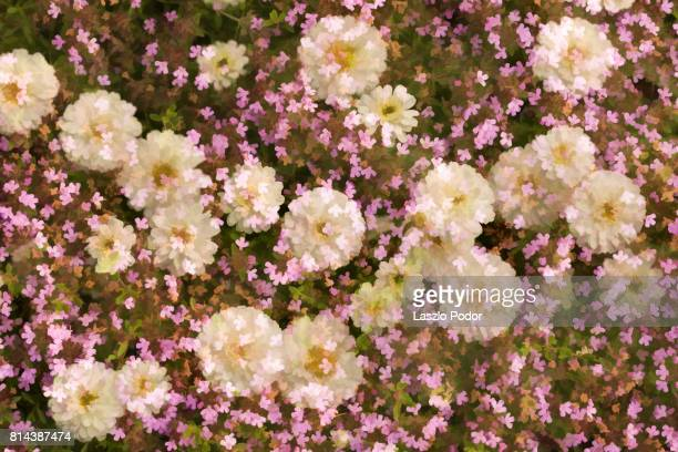 flower carpet - flowering plant stock photos and pictures