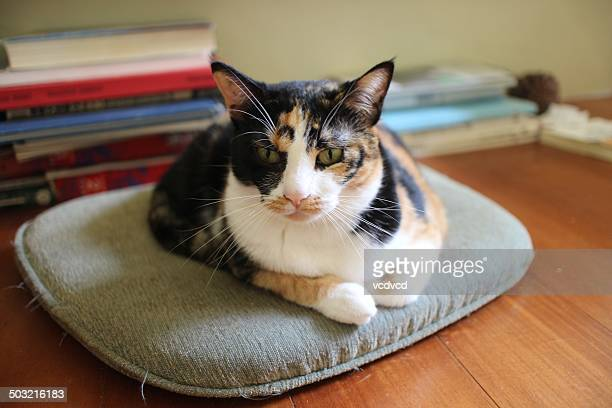 A flower cat sit on a cushion