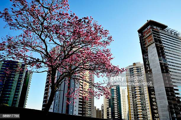 flower city - londrina stock pictures, royalty-free photos & images