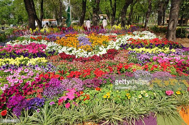 flower combo - flower show stock pictures, royalty-free photos & images