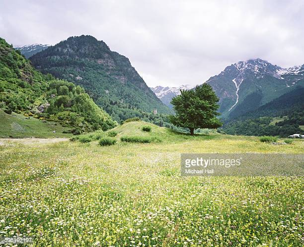 Flower covered alpine meadow