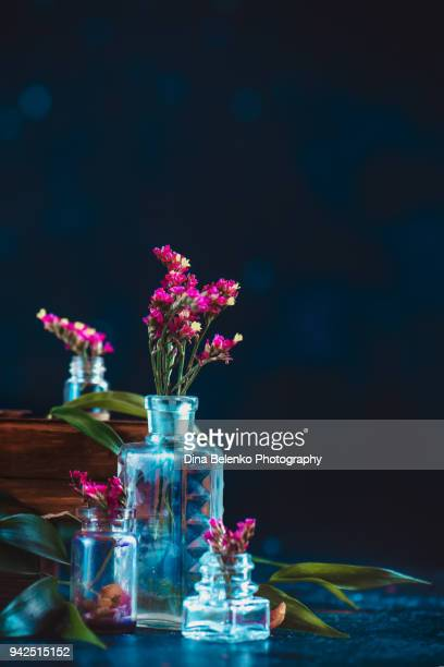 flower, dark, bottle, glass, purple, pink, spring, still life, perfume, concept, copy space, black, minimalist, simple, nature, beauty, fragile, bloom, botany,