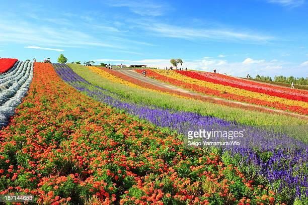 Flower field in the countryside, Hokkaido