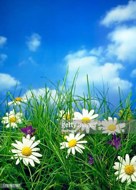 Flower field under a clear blue sky