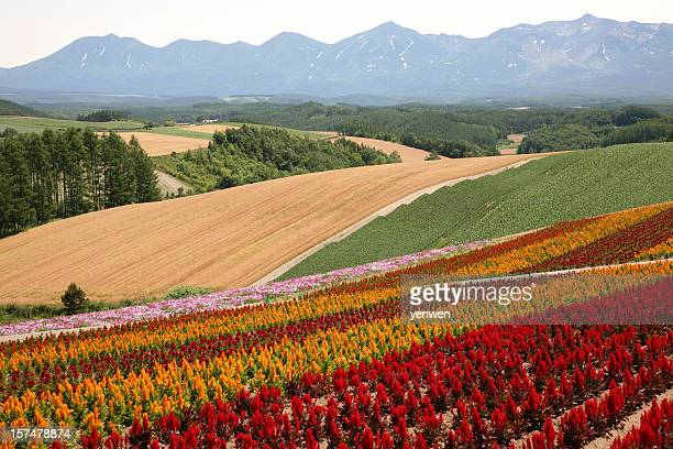 Flower Fields and Mountains