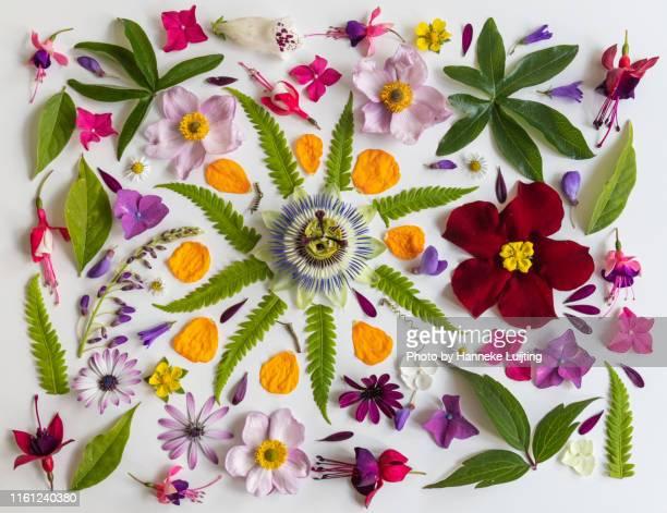 flower flat lay - summer in a dutch garden - composizione di fiori foto e immagini stock
