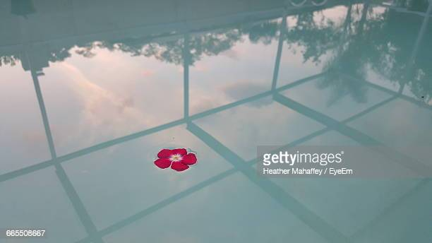 flower floating on swimming pool with reflection - palm harbor stock-fotos und bilder