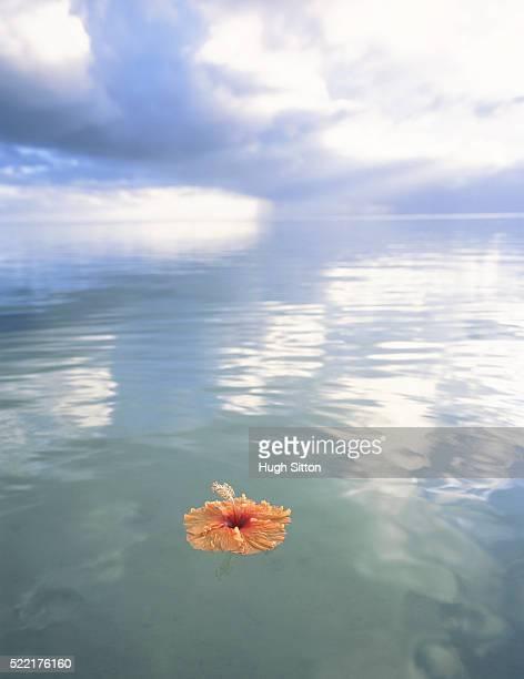 a flower floating upon the sea - hugh sitton fotografías e imágenes de stock