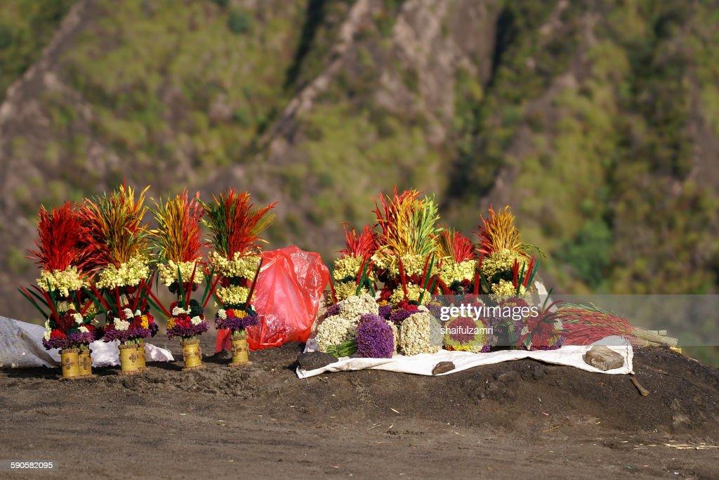 Flower for Bromo : Stock Photo