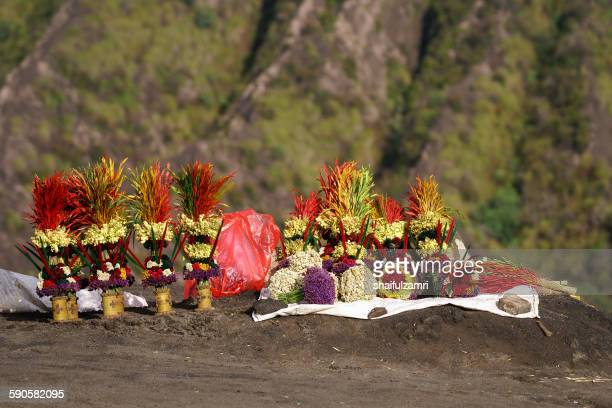 flower for bromo - shaifulzamri stock pictures, royalty-free photos & images