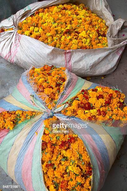 Flower for sale