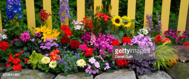 flower garden and picket fence - begonia stock pictures, royalty-free photos & images