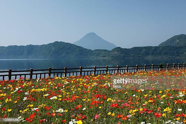 flower garden, ibusuki, kagoshima, japan - 指宿市 ストックフォトと画像