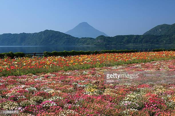 flower garden, ibusuki, kagoshima, japan - 鹿児島県 ストックフォトと画像