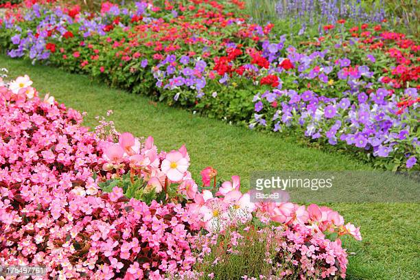 flower garden in summer - geranium stock pictures, royalty-free photos & images
