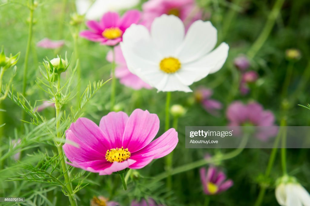 Flower Garden In The Field Pink Flowers On Nice Hy Day Stock Photo