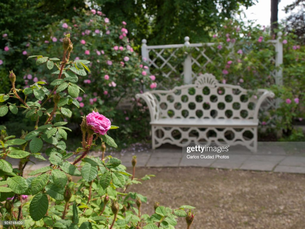 Flower Garden With White Wooden Bench And Fence Stock Foto Getty