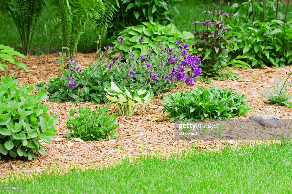 Flower Garden With Wood Chip Mulch Stock Photo