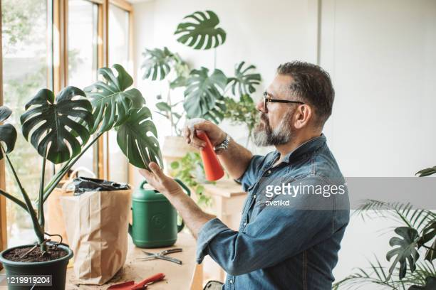 flower gardening during isolation period - one mature man only stock pictures, royalty-free photos & images