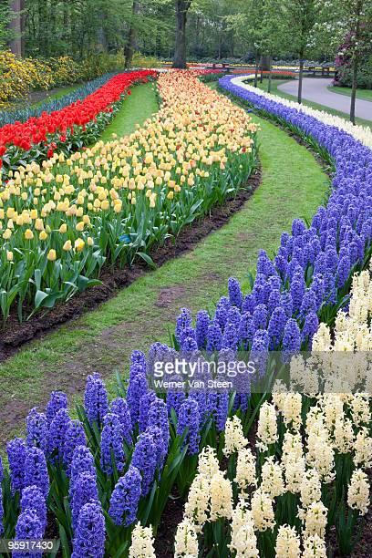 flower gardens of keukenhof, netherlands - nature stockfoto's en -beelden