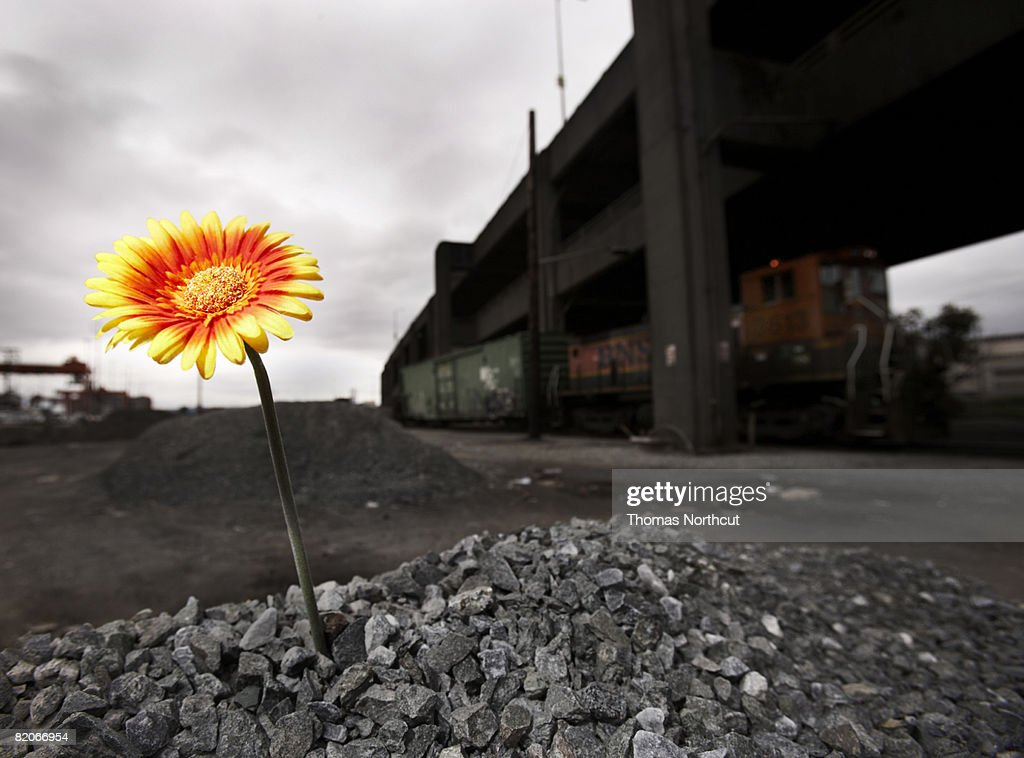 flower grown in unespected place : Stock Photo