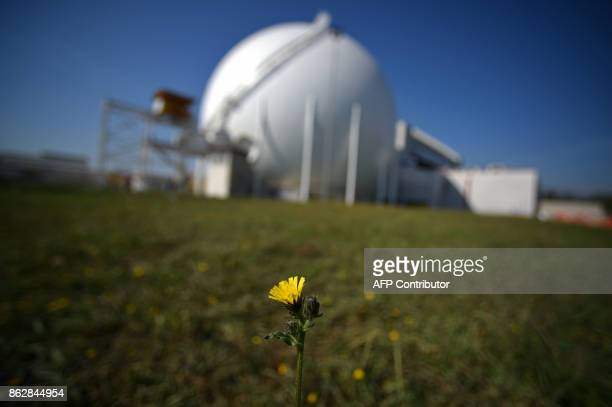A flower grows in a field near the Garigliano Nuclear Power Plant located at the outskirts of Sessa Aurunca 160km southern Rome on October 17 2017...