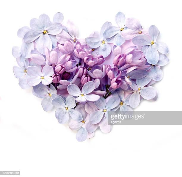 Blume Herzen