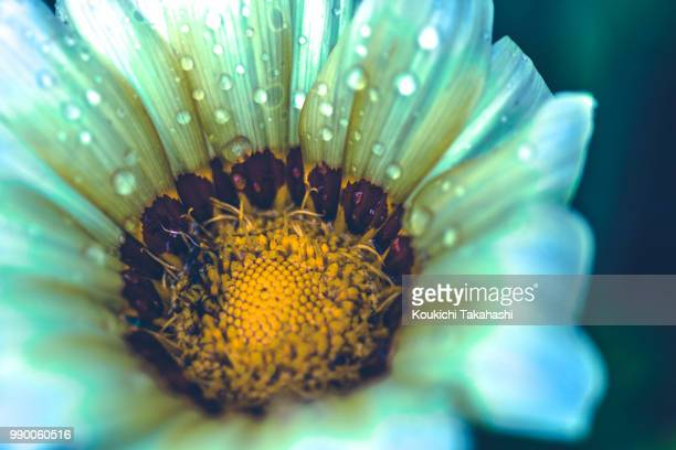 flower - https://500px.com/photo/116814417/ - koukichi koukichi stock photos and pictures