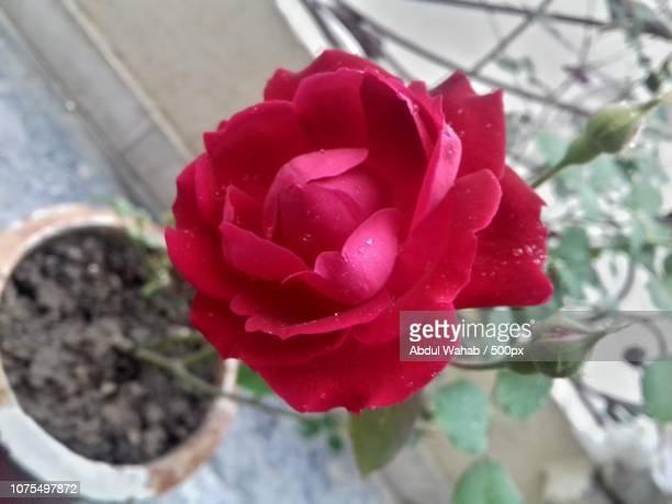 Flower I adore