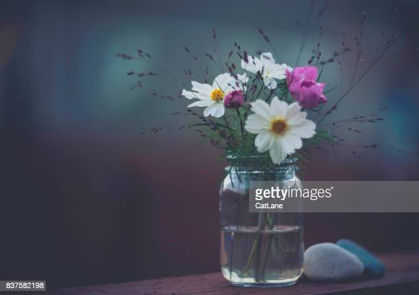 flower immersion. simple bouquet of cosmos flowers in glass jar - cosmos flower stock photos and pictures
