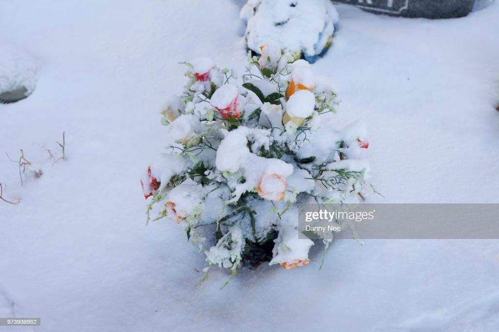 Flower in a Graveyard : Foto de stock