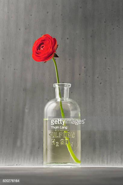 flower in a jar of sulfuric acid - sulfuric acid stock photos and pictures