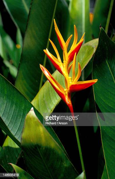 flower in gardens at jurong bird park. - jurong bird park stock pictures, royalty-free photos & images