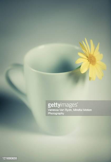 flower in mug - vanessa van ryzin stock photos and pictures